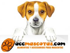 Blog de Mascotas
