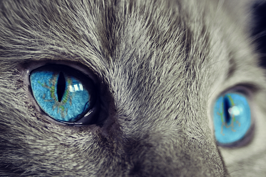 Dónde viajar con mascotas, con esta información seguro te divertirás.