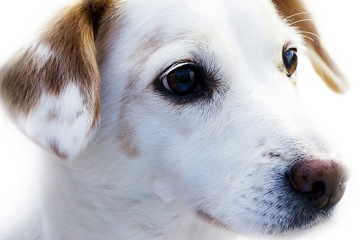 Otitis en perros. Cuidados para tu mascota.