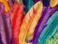 Todo sobre la muda de plumas en las aves