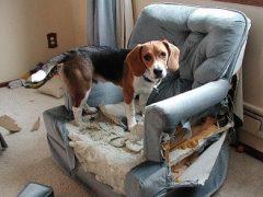 que-hacer-con-un-perro-rebelde_ostd2