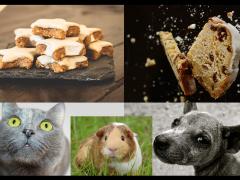 alimentacion de las mascotas en navidad