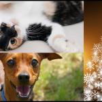 Gatos y perros, los mejores amigos de la navidad