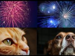 mascotas en ano nuevo