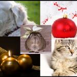 Navidad y mascotas, noche buena con tu mascota