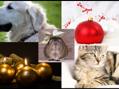 navidad y mascotas