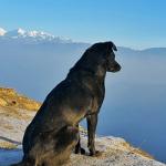 Trámites legales para viajar con tu mascota