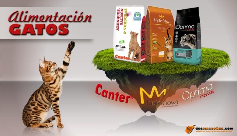 Venta pienso para gatos